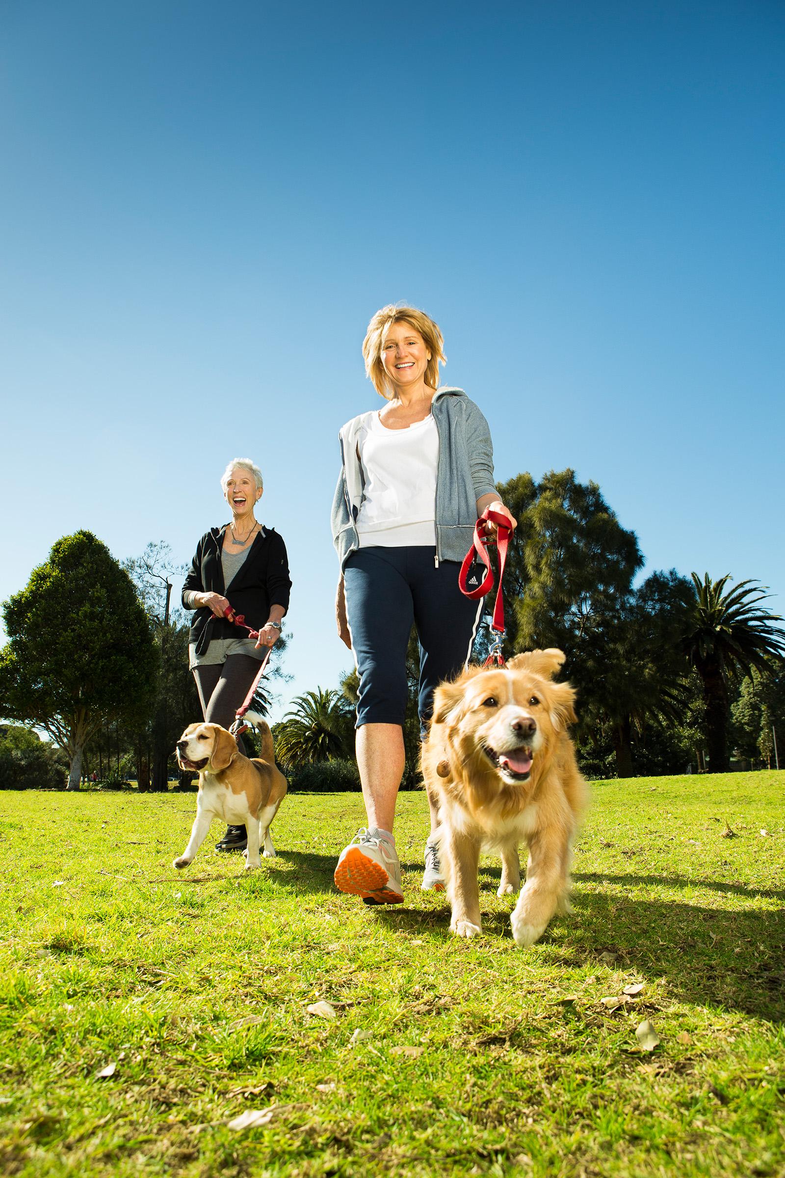 Active Retirees Beagle Border Collie dog park walk