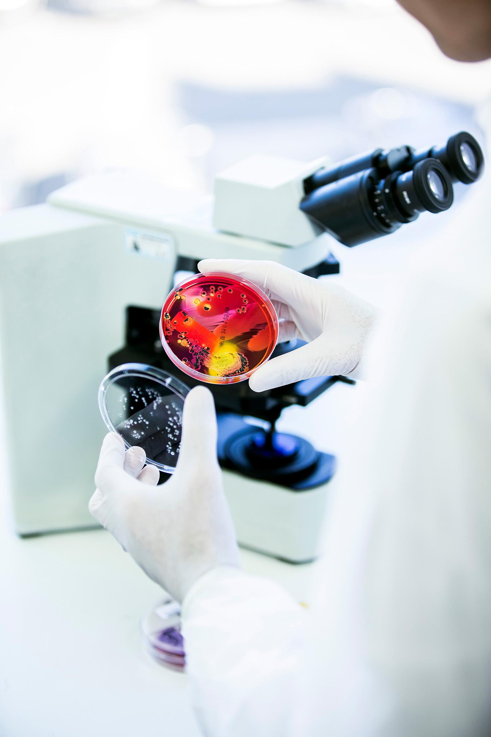 Labratory medical editorial photography Sonic Healthcare Douglass Hanly Moir Pathology Pathologist Doctor Petri dish bacteria Microscope