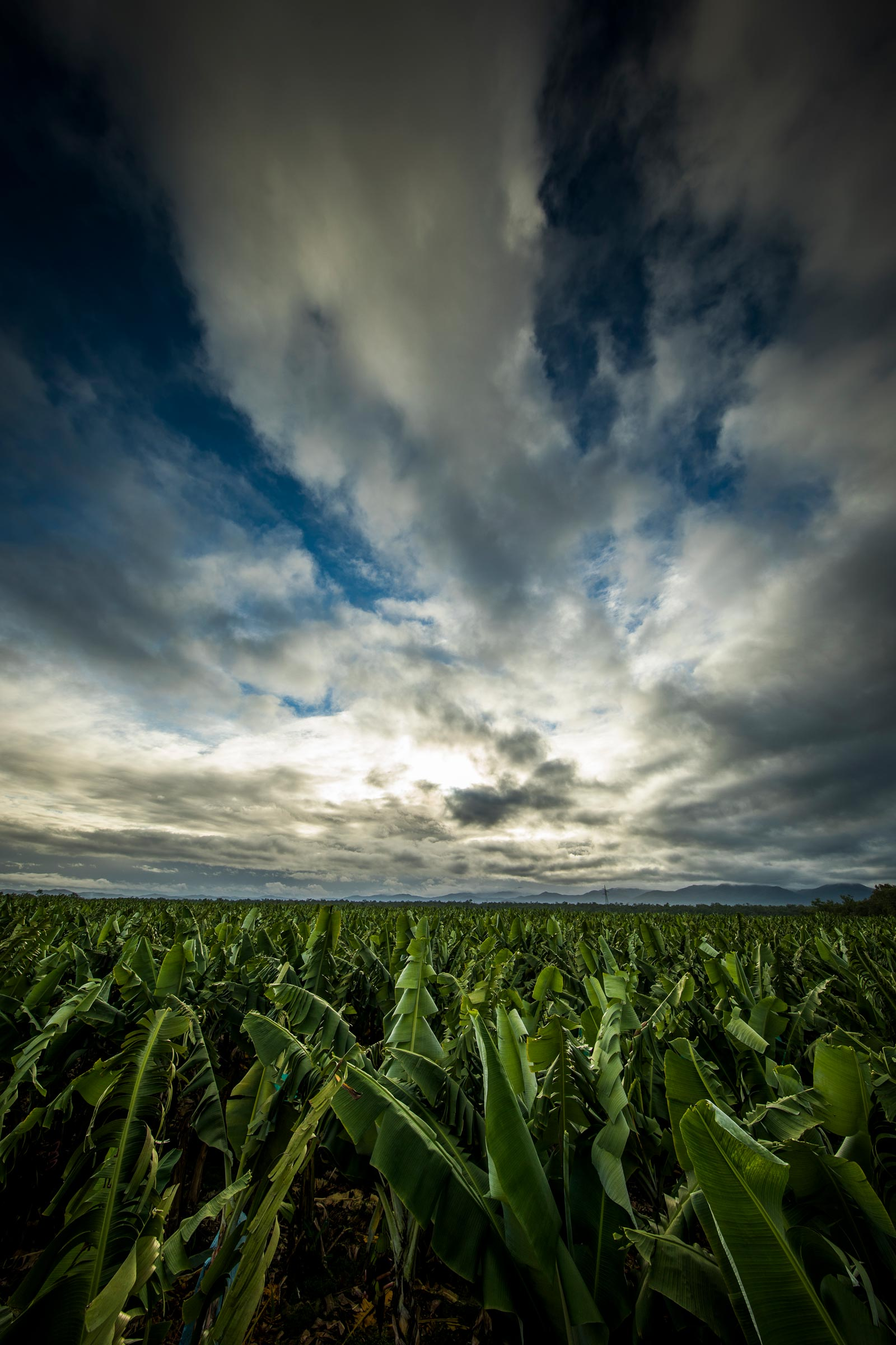 banana plantation landscape with blue sky and clouds
