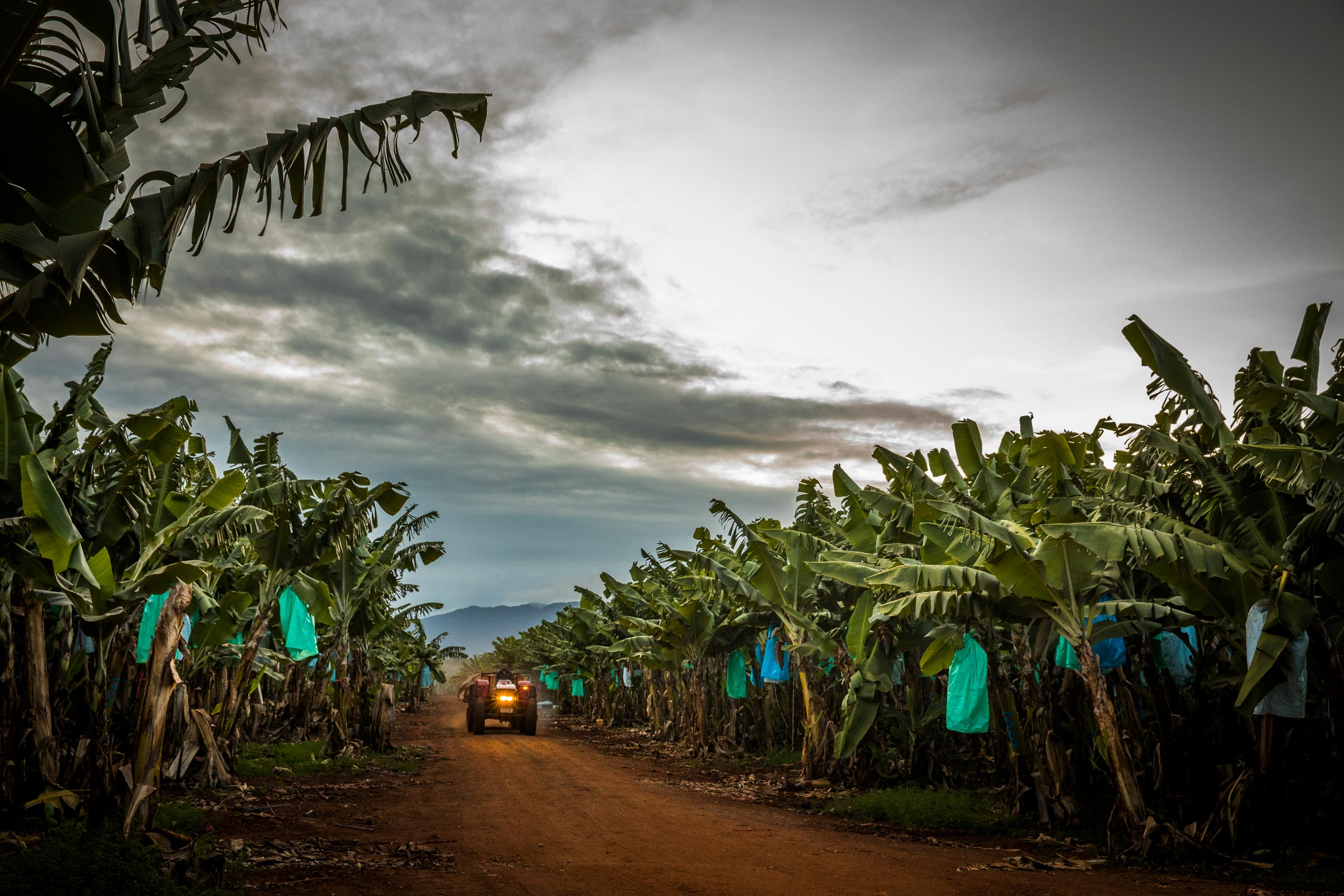 tractor driving down road in banana plantation with storm clouds