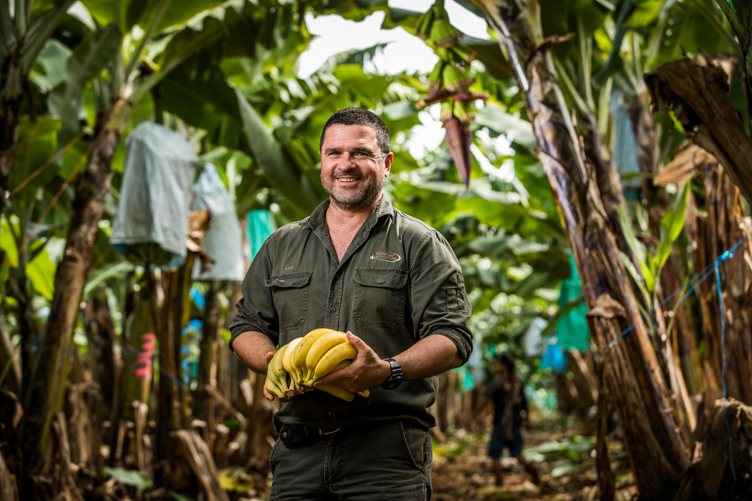 farmer holding a bunch of bananas in plantation